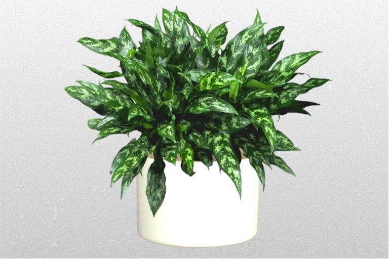 Ten Great Indoor Plants Creative Plant Designs