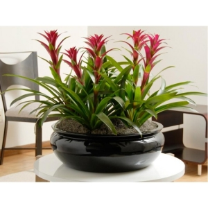 Interior Plant Service - Bromeliads in Table Top Container