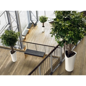Interior Plant Service - Office Plants and Containers