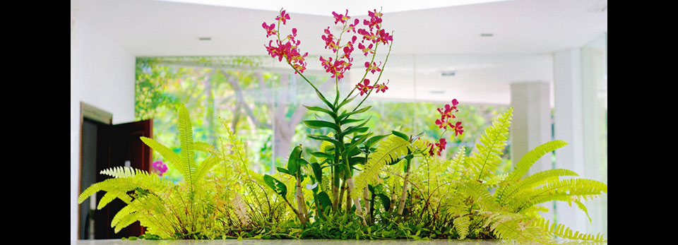 boston-fern-and-orchid-for-slider