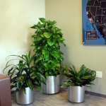 Office Plants