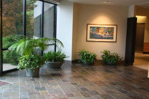 Lobby Plants