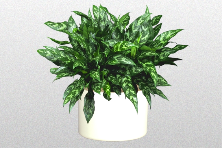 Ten Great Indoor Plants Creative Plant Designs