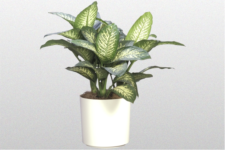 Indoor Plants and the Modern Interior - Creative Plant Designs