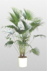 Palm Chinese Fan