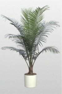 Palm Majesty